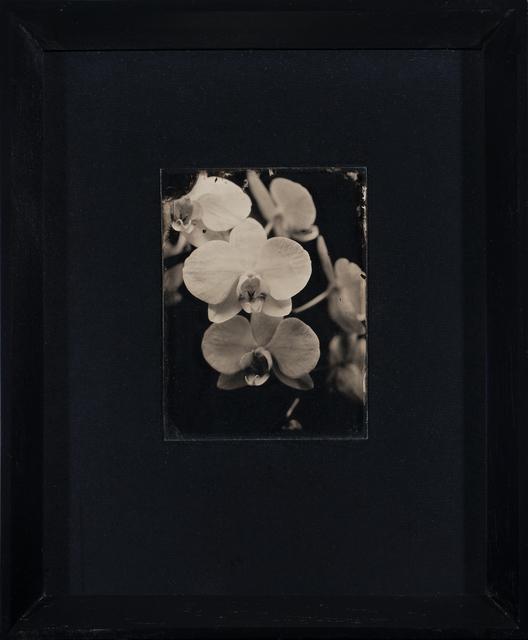 , 'Orchid,' 2019, Barnard