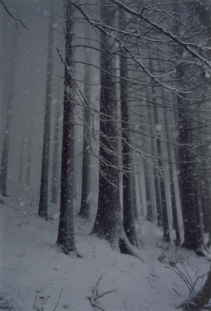 , 'Untitled (Forest 02, Snow Storm),' 2000, Mai 36 Galerie