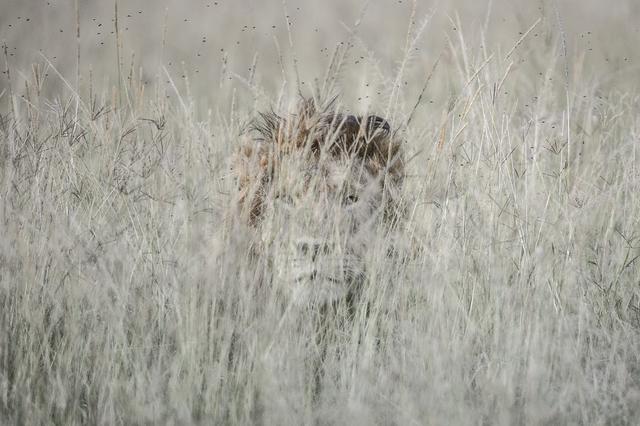 , 'Masque dans les herbes (Mask in the herbs),' , Paul Nicklen Gallery