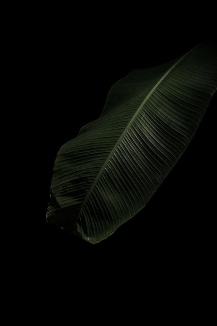 , 'Study n.09,' 2018, ILEX Gallery