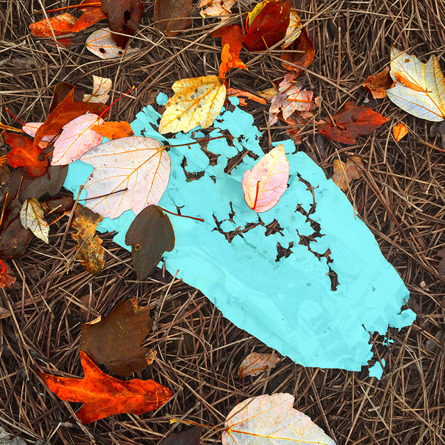 , '06_06 (Teal Sat Leaves),' 2016, HATHAWAY | Contemporary Gallery