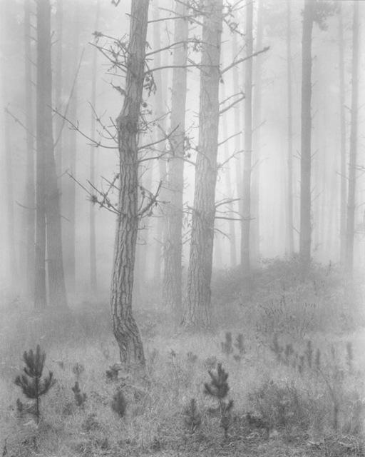 , 'Del Monte Forest; originally titled Pines In Fog,' 1951, Susan Spiritus Gallery
