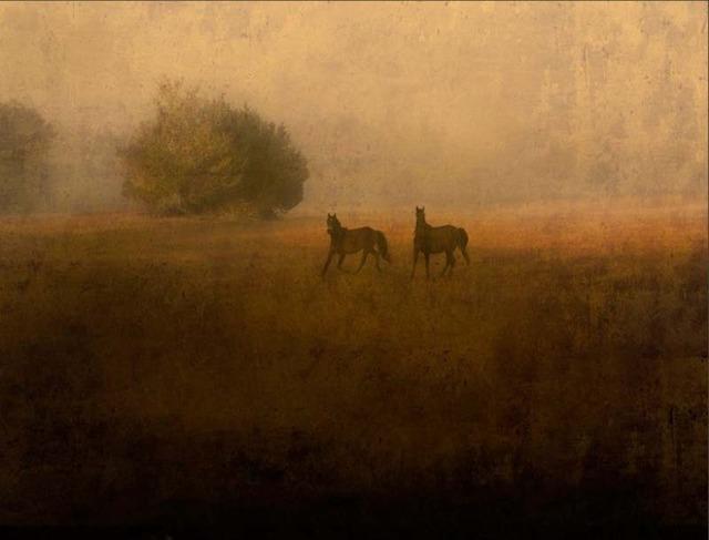 Jack Spencer, 'Two Wild Horses, Cumberland Island, Georgia,' 2007, Contessa Gallery