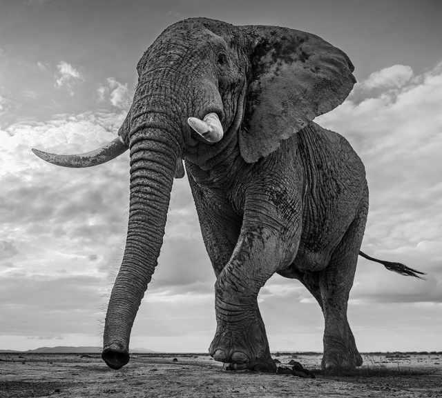 David Yarrow, 'Giant's Kingdom', ca. 2015, Isabella Garrucho Fine Art