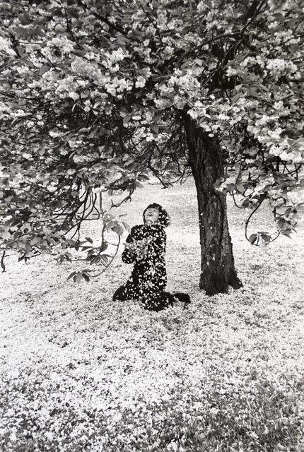 , 'Parc de Sceaux, Cerisiers Japonais,' 1983, Scheinbaum & Russek Ltd.