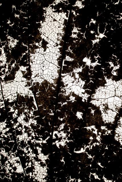 , 'Folhas,' 2013, Quadrado Azul
