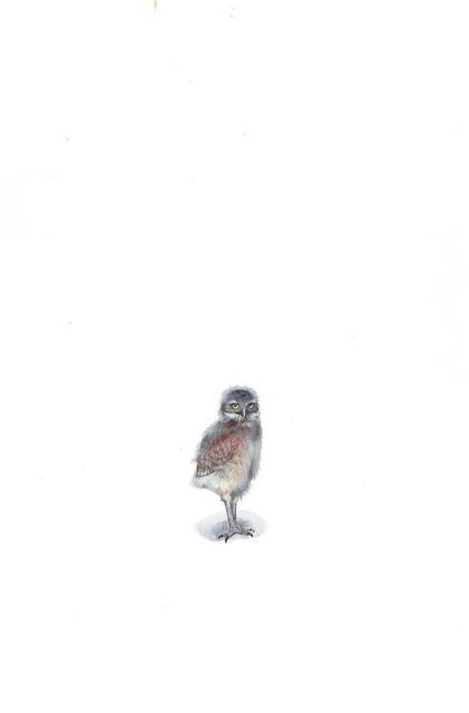 Dina Brodsky, 'Spotted Owlet', 2019, Garvey | Simon