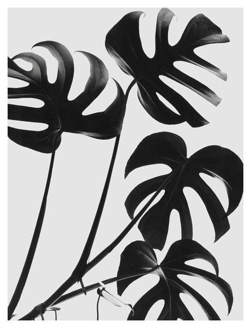 , 'Folhas,' 1950, Galeria da Gávea