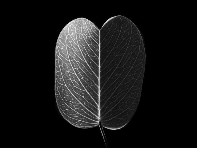 , 'Nature - Feuille de Danang,' 2015, Galerie Lelong & Co.