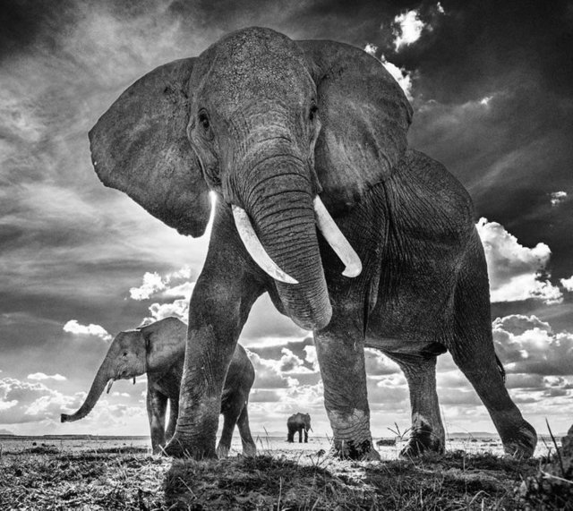 David Yarrow, 'The Untouchables II', 2017, Photography, Archival Pigment Print, Maddox Gallery