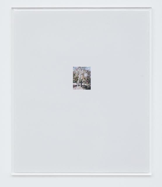 , 'Apple Tree 3,' 2017, Tomio Koyama Gallery