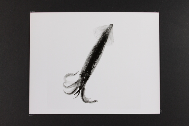 , 'Calamary,' , Gallery LVS