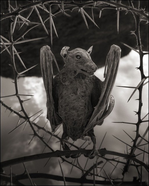 , 'Calcified Bat II, Lake Natron, 2012,' 2012, photo-eye Gallery
