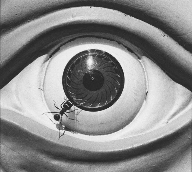 David Wojnarowicz, 'Untitled (eye with ants) from the Ant series ', 1988-1989, P.P.O.W