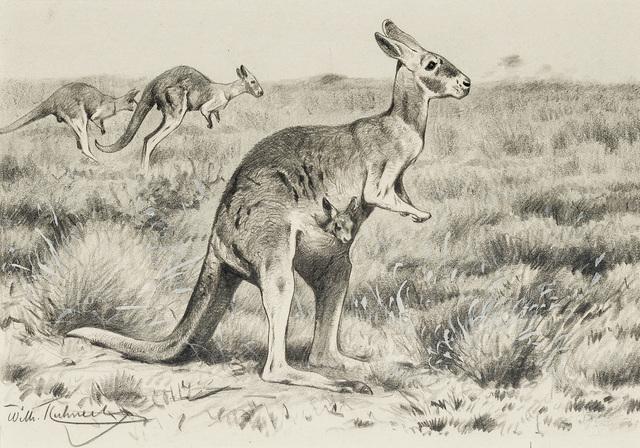 , 'Kangaroos,' ca. 1900, Kunkel Fine Art