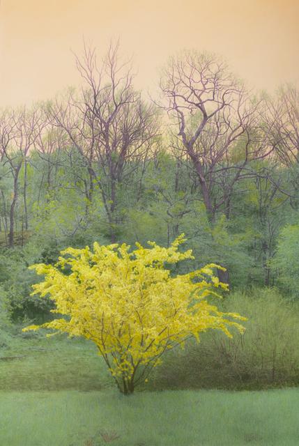 , 'Yellow Flowering Tree, Orange Sky,' , Pucker Gallery