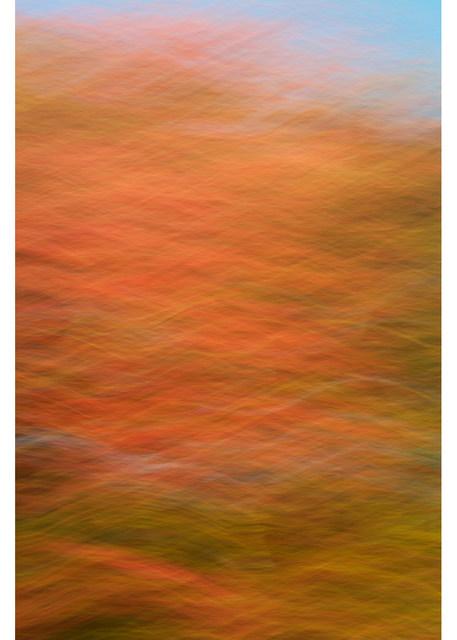 , 'Fall Colors 322,' 2015, Spotte Art