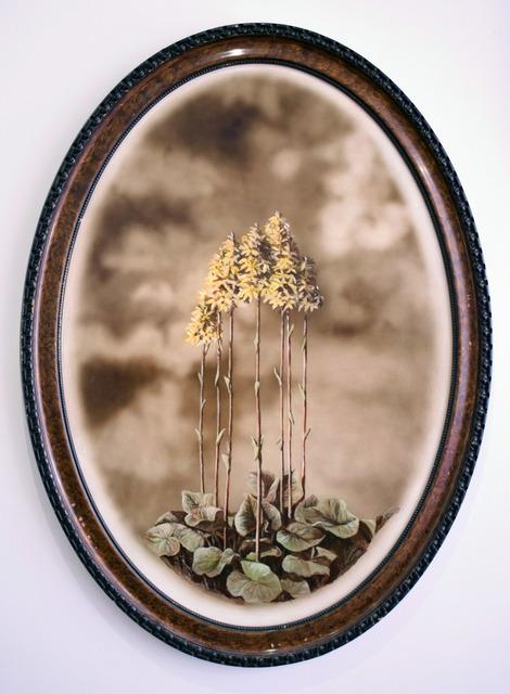 , 'Ligularia Sibirica,' 2019, Ani Molnár Gallery
