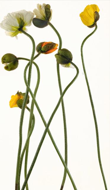 , 'Warwasong 10,' 2007, Rosenbaum Contemporary