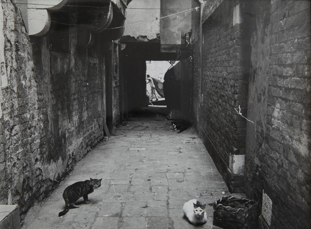 , '3 chats, Venise,' 1959, Blum & Poe