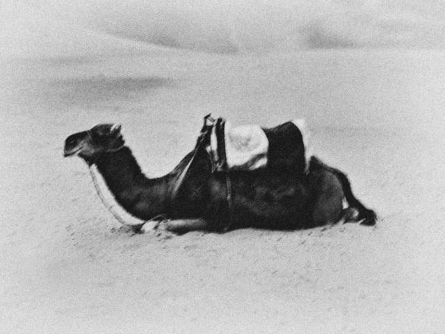 , 'Camel in Sahara, from the series 'Karawan',' 2017, Kahmann Gallery