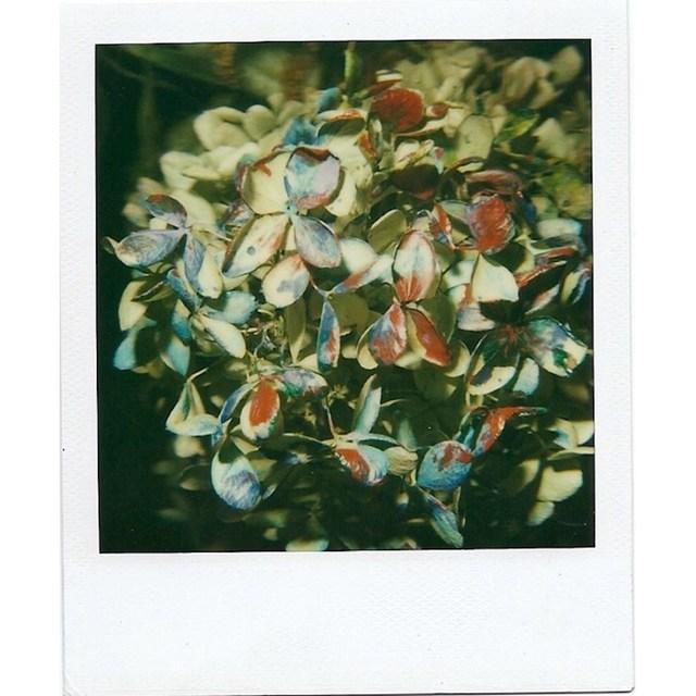 , 'Still Life,' , Grob Gallery