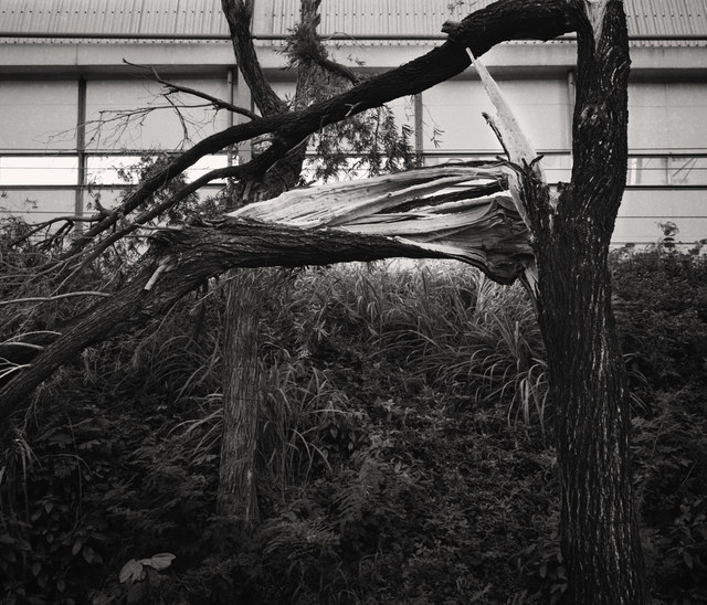 South Ho Siu Nam 何兆南, 'Whiteness of Trees', 2018, Blindspot Gallery