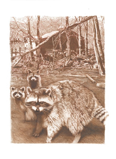 Mary Snowden, 'Coon Family', Gail Severn Gallery