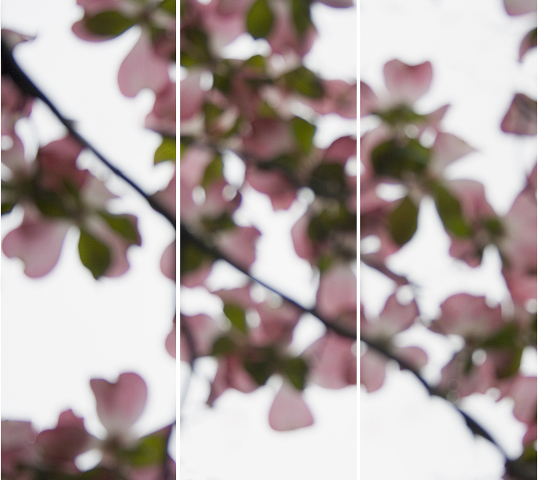 Jeri Eisenberg, 'Dogwood Pink No. 5', 2008, Carrie Haddad Gallery