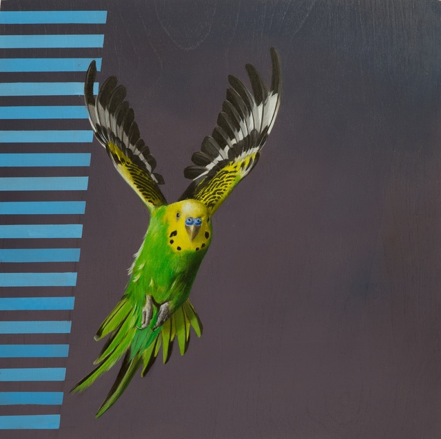 , 'Visual Navigation in Budgerigar Flight,' 2016, Sullivan+Strumpf