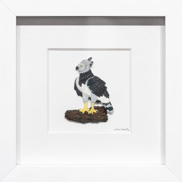 , 'Harpy Eagle,' 2018, Paradigm Gallery + Studio