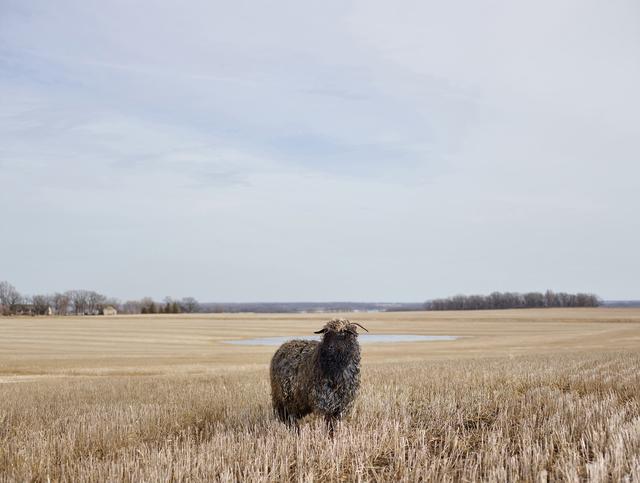 , 'Curly, Otter Tail County, Minnesota, USA,' 2015, Burnet Fine Art & Advisory