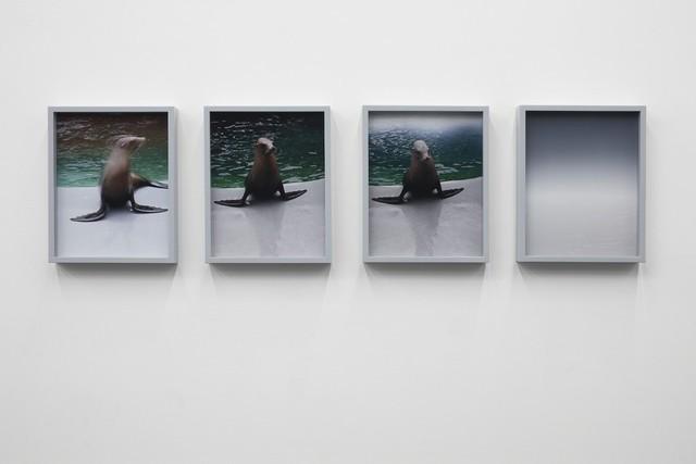 Elad Lassry, 'Sea Lions', 2010, 303 Gallery
