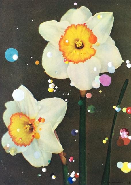 , 'Narcissus Incomparabilis Monique,' 2015, Hales Gallery