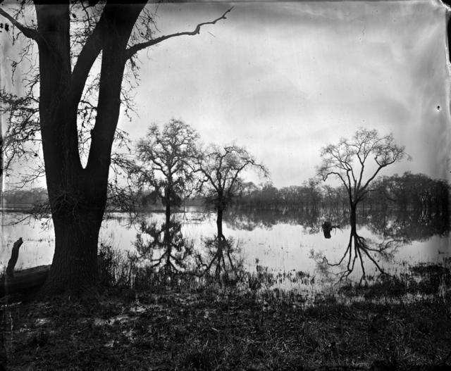 , 'Flooded Oaks,' 2010, Scott Nichols Gallery