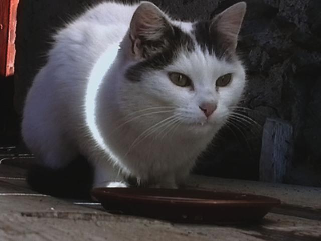 , 'Büsi (Kitty),' 2001, Guggenheim Museum