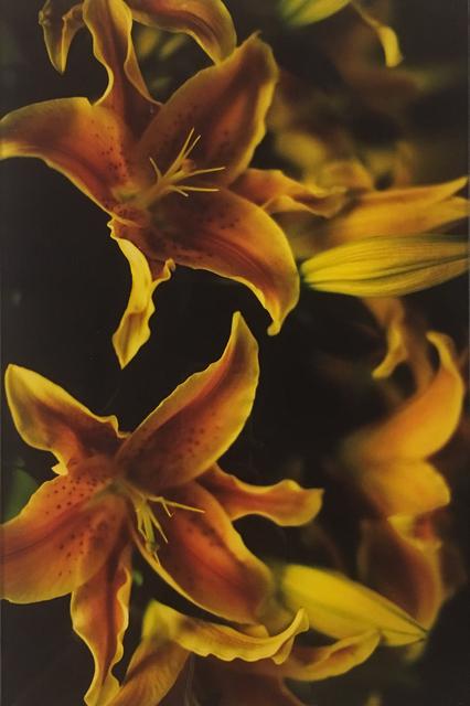 Mika Ninagawa, 'Nior', 2010, Three Shadows +3 Gallery