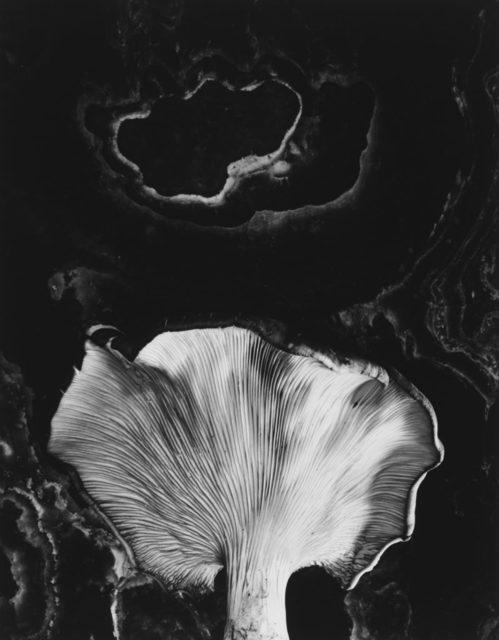 , 'Fungus, Ipswich, MA,' 1960, Obscura Gallery