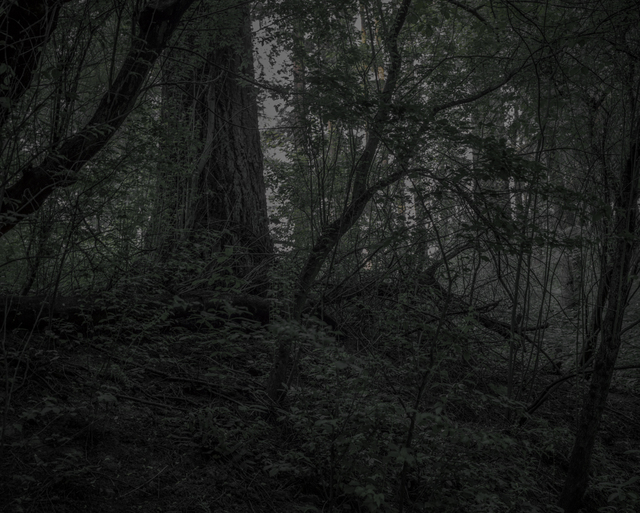 , 'From the series Darkwood, #21,' 2014, Circuit Gallery