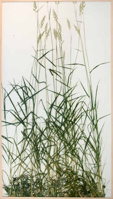 , 'großes rasenstueck coll. schaeferholz,' 2015, CONRADS