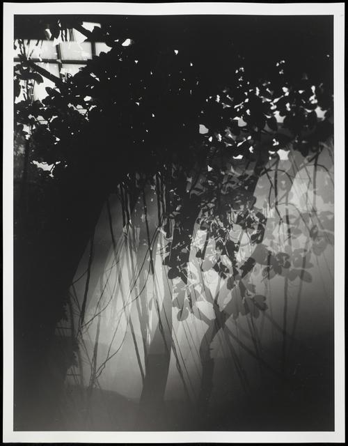 , 'Botanical Garden/Bronx Zoo XXII,' 2015, Galleri Bo Bjerggaard