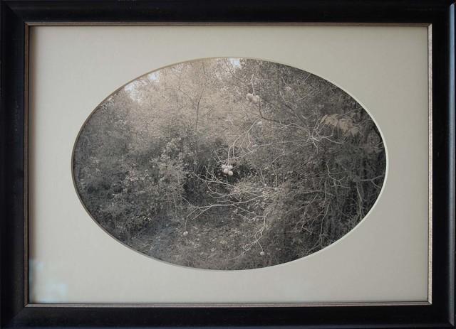 , 'Buckeye, Plum Creek, Texas    ,' , Etherton Gallery