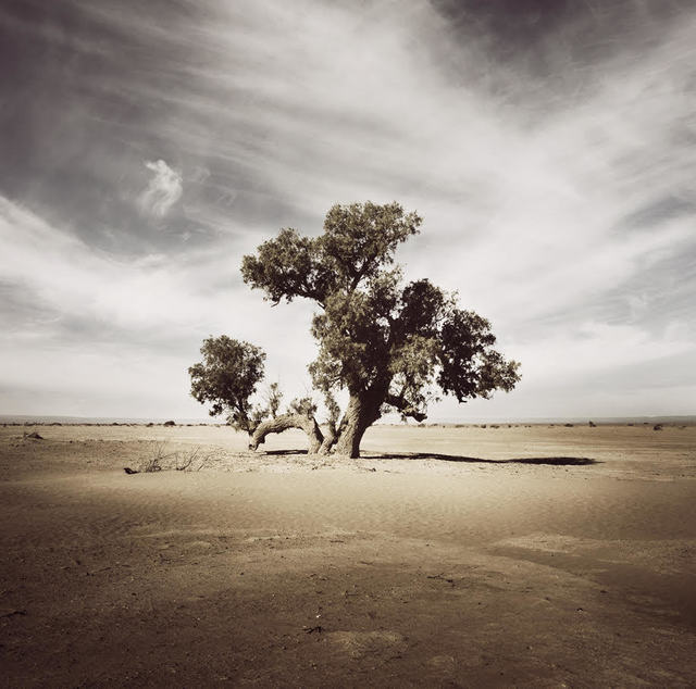 Bernhard Quade, 'Morocco Tree Sahara', 2008, Photography, Chromogenic Print, CHROMA GALLERY