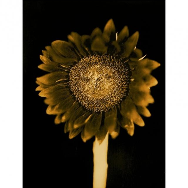 Chuck Close, 'Sun Flower', 2011, Artsnap