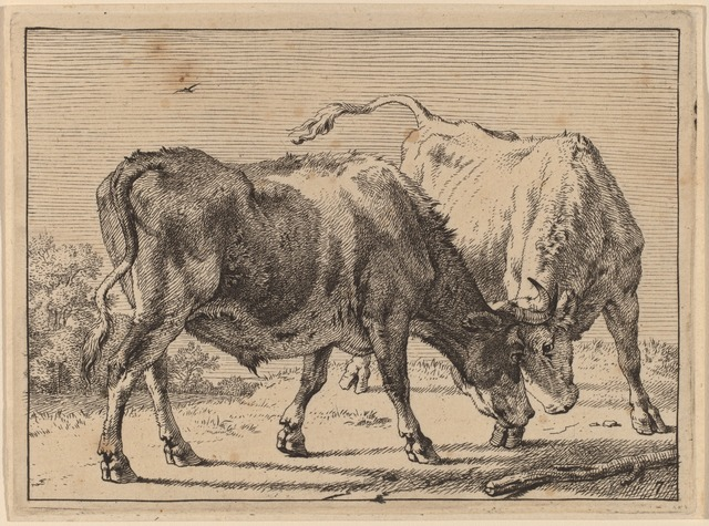 Paulus Potter, 'Two Oxen Fighting', 1650, Print, Etching, National Gallery of Art, Washington, D.C.