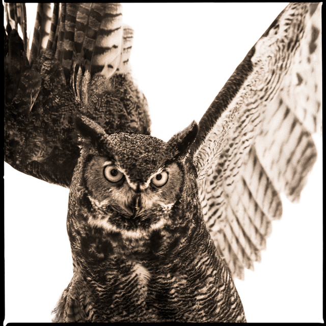 , 'Owl-IV,' 2018, Visions West Contemporary