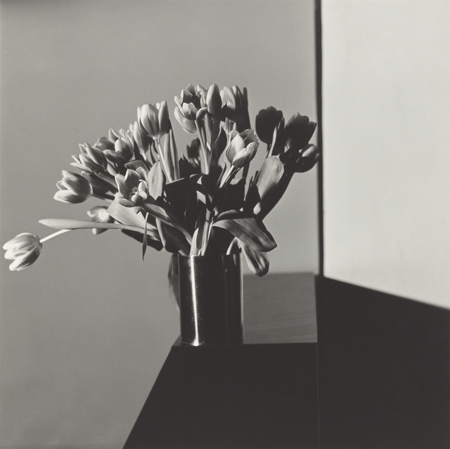 , 'Tulips,' 1978, J. Paul Getty Museum