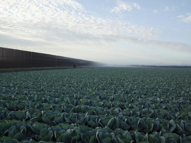 , 'Cabbage Crop Near Brownsville, Texas, 2015 ,' 2015, Amon Carter Museum of American Art
