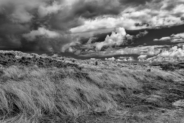 , 'Windswept Tresco Island, Cornwall, England,' , Soho Photo Gallery
