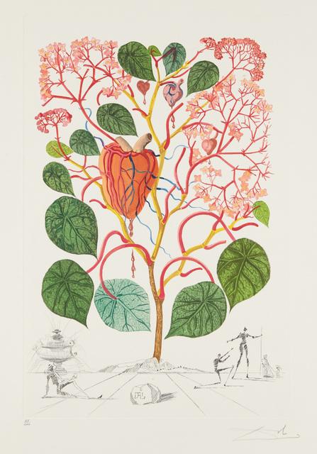 Salvador Dalí, 'Begonia (Anacardium recordans), from Flordali® (Flora Dalinae)', 1968, Phillips